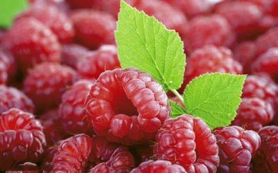 黑龙江省哈尔滨市南岗区红树莓 鲜果