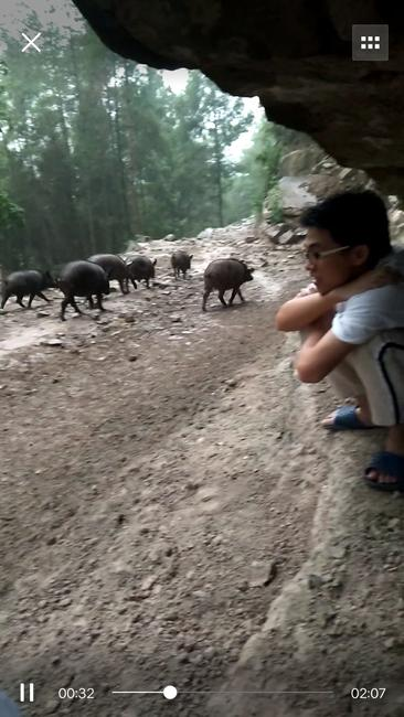 山林黑猪 200-300斤