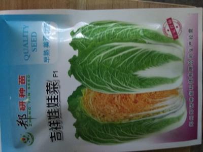 河南省商丘市梁园区娃娃菜种子