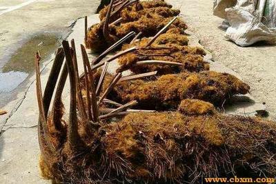广西壮族自治区梧州市长洲区狗脊