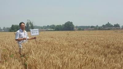 山西省晋中市祁县小麦种子