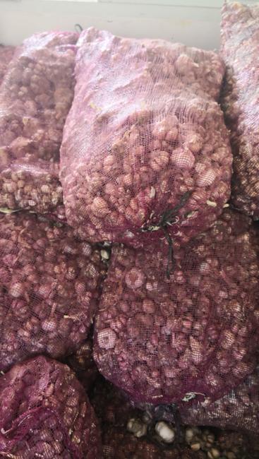 紫皮大蒜 4.5-5.0cm 多瓣蒜