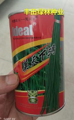 福建省漳州市南靖县豆角种子 ≥98%