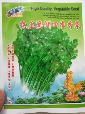 河南省商丘市夏邑县香菜种子