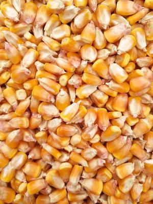 安徽省亳州市谯城区先玉335玉米油