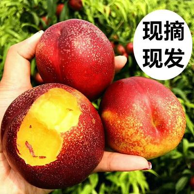 甘肃省庆阳市宁县庆阳油桃 1两以上 50mm以上