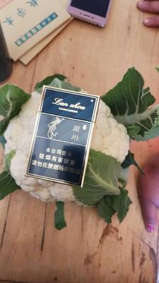甘肃省定西市临洮县白花菜花 紧密 1~2斤 乳白色