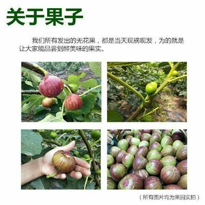 四川省成都市龙泉驿区波姬红无花果 50-60克