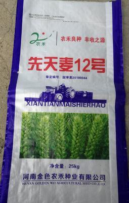 河南省新乡市新乡县小麦种子