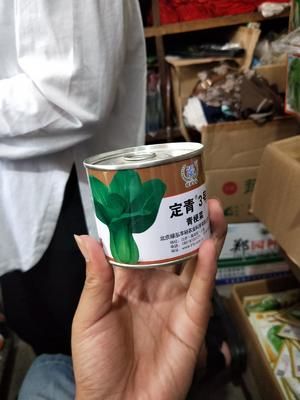 河南省商丘市夏邑县青梗菜种子