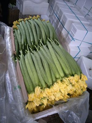 山东省潍坊市寿光市中绿丝瓜 40cm以上