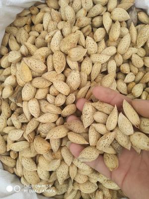 新疆维吾尔自治区喀什地区喀什市巴旦木 1年 带壳