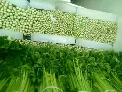 宁夏回族自治区中卫市海原县西芹 60cm以上 露天种植 0.5~1.0斤