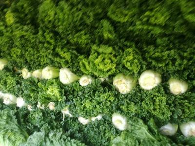 贵州省毕节市威宁彝族回族苗族自治县青麻叶大白菜 1~2斤 毛菜