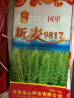江苏省徐州市沛县小麦种子