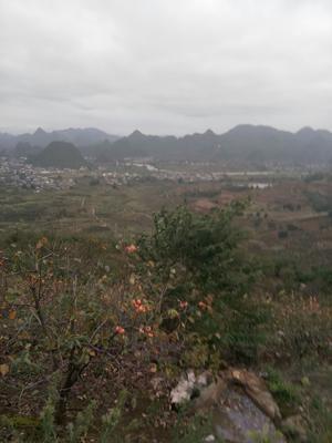 广西壮族自治区桂林市平乐县农家柿饼 箱装