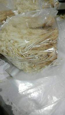 江苏省徐州市铜山区黄金针菇
