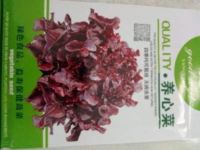 山东省济南市历城区苋菜种子