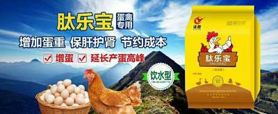 蛋禽饲料增加产蛋量