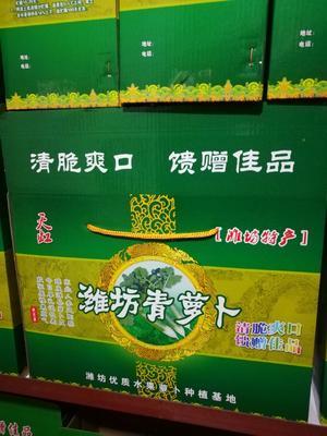 山东省潍坊市潍城区潍县青萝卜 1~1.5斤