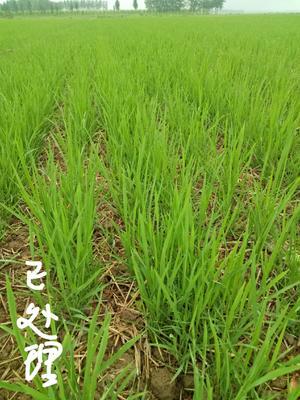 重庆南岸区选种育苗机械