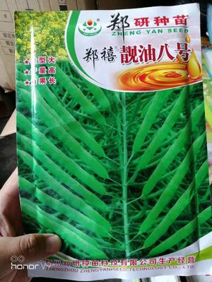 河南省商丘市梁园区油菜籽种子