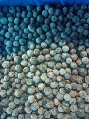 贵州省黔东南苗族侗族自治州锦屏县兔眼蓝莓 冻果 4 - 6mm以上