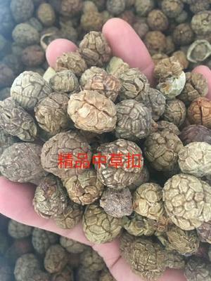 广西壮族自治区玉林市福绵区豆蔻