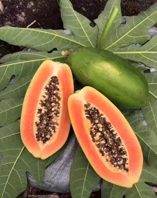 红心木瓜 1.5 - 2斤