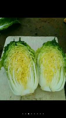 河北省张家口市蔚县玲珑黄白菜 3~6斤 净菜