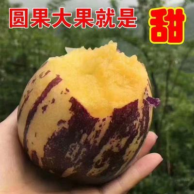 甘肃省张掖市山丹县山丹人参果 3 - 4两以上