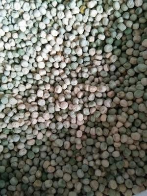 辽宁省辽阳市太子河区甜脆豌豆 10-12cm 较饱满