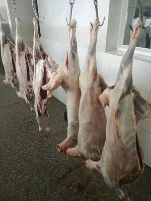 河北省张家口市桥西区羊肉卷 生肉