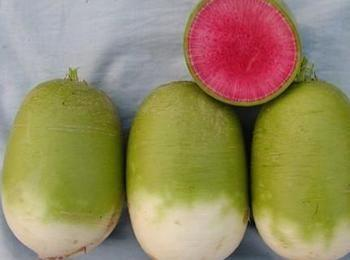 吉林省长春市农安县心里美萝卜 1~1.5斤