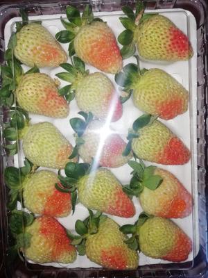 云南省曲靖市会泽县圣安德瑞斯草莓 50克以上