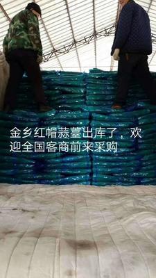 山东省济宁市金乡县金乡红帽蒜苔 一茬 70cm以上 精品