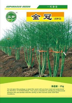 山东省济南市历城区芦笋种子