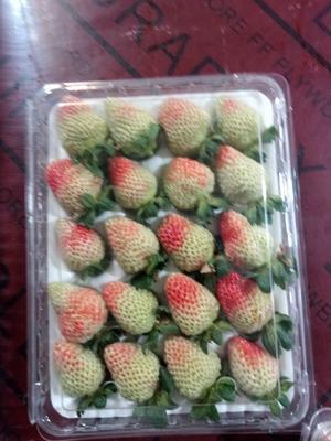 云南省昆明市官渡区圣安德瑞斯草莓 20克以上