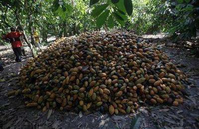 广东省喀麦隆咖啡豆