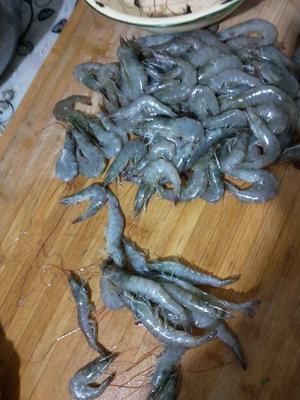甘肃省白银市景泰县南美白对虾 人工殖养 4-6钱