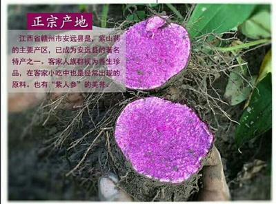 这是一张关于紫山药 50~70cm 的产品图片