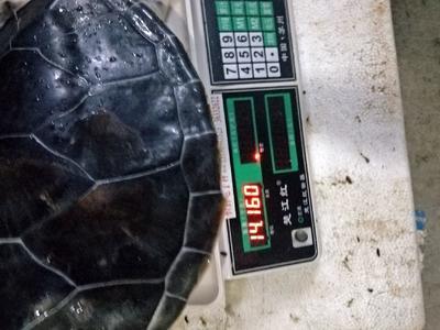 海南省海口市美兰区龟甲