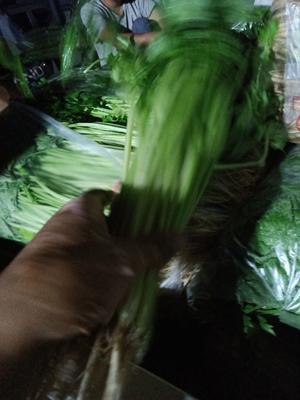 宁夏回族自治区吴忠市青铜峡市香芹 50~55cm 露天种植 0.5斤以下