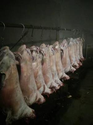 山东省潍坊市安丘市羊肉类 生肉