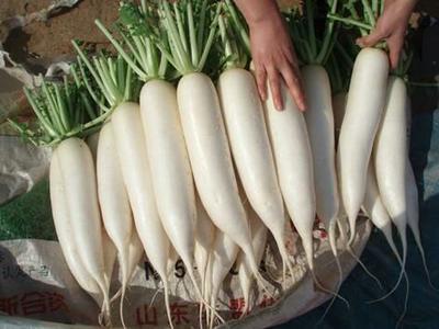 贵州省黔南布依族苗族自治州瓮安县韩国白雪萝卜 0.2~1斤