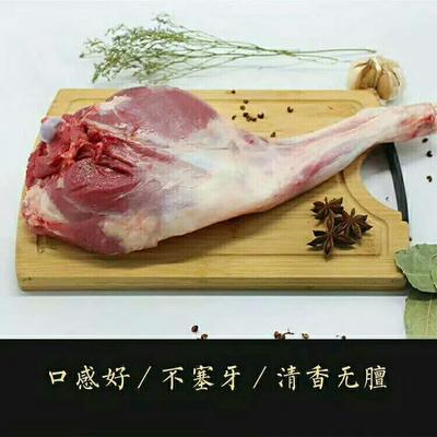 甘肃省武威市民勤县绵羊肉 生肉