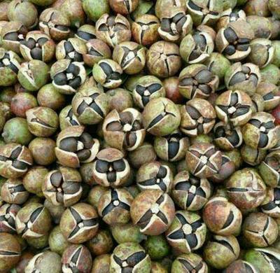广西壮族自治区柳州市融水苗族自治县油茶籽