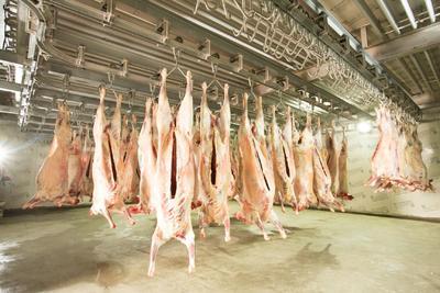 新疆维吾尔自治区塔城地区塔城市羊肉类 生肉