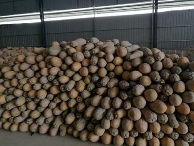 重庆黔江区蜜本南瓜 4~6斤 长条形