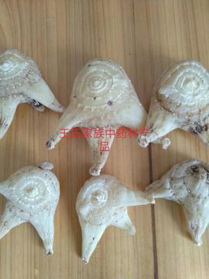 广西壮族自治区桂林市资源县白及
